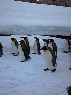 ペンギンー!